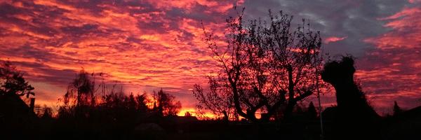 Helt vild flot novembermorgen i Viby. Foto: Lisbeth Norsker